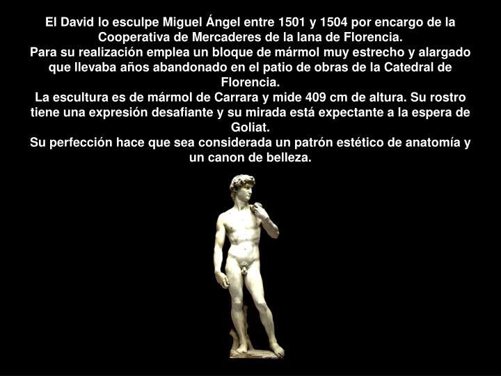 El David lo esculpe Miguel Ángel entre 1501 y 1504 por encargo de la Cooperativa de Mercaderes de la lana de Florencia.