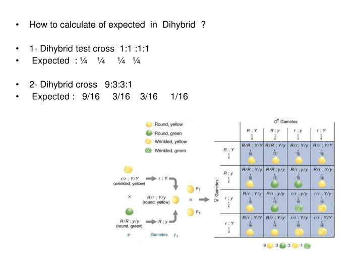 How to calculate of expected  in  Dihybrid  ?