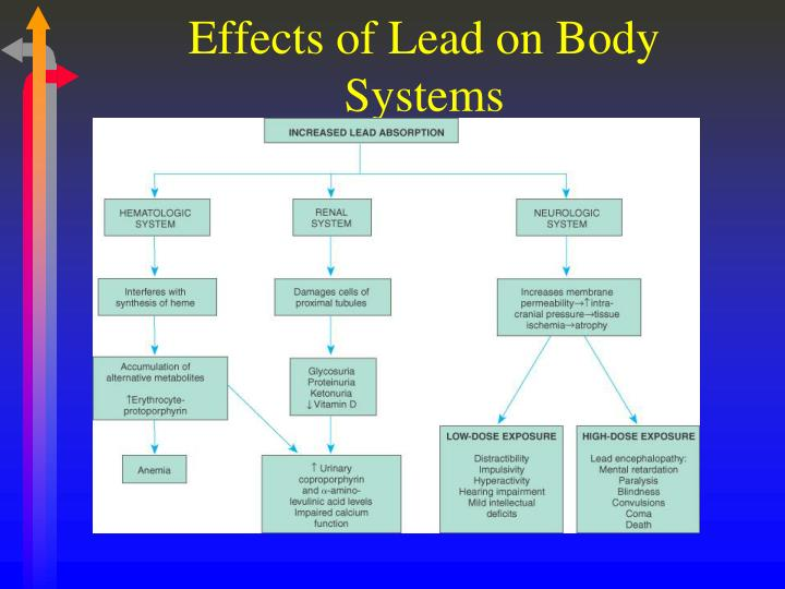 Effects of Lead on Body Systems