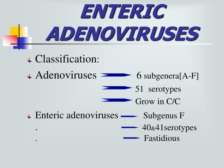 ENTERIC             ADENOVIRUSES