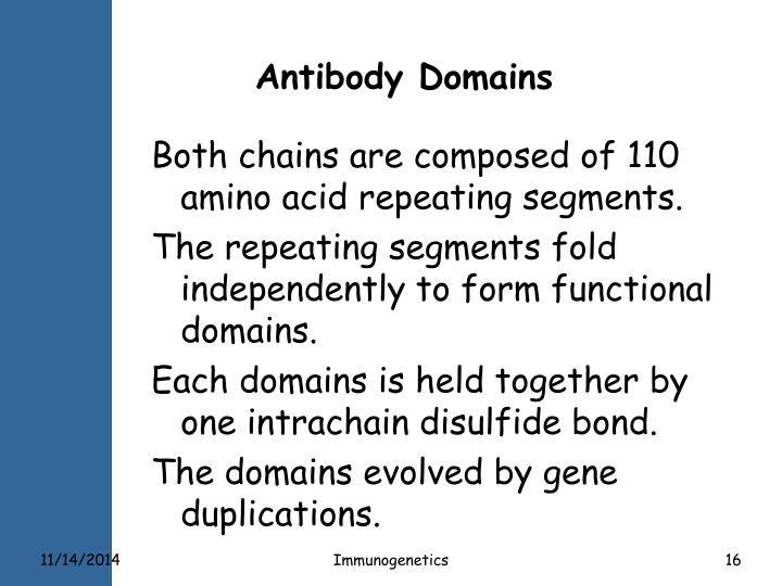 Antibody Domains