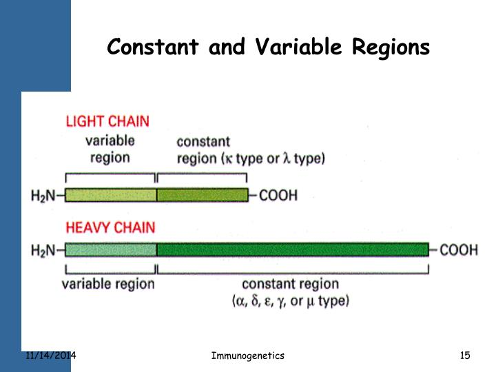 Constant and Variable Regions