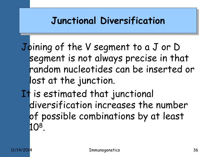 Junctional Diversification