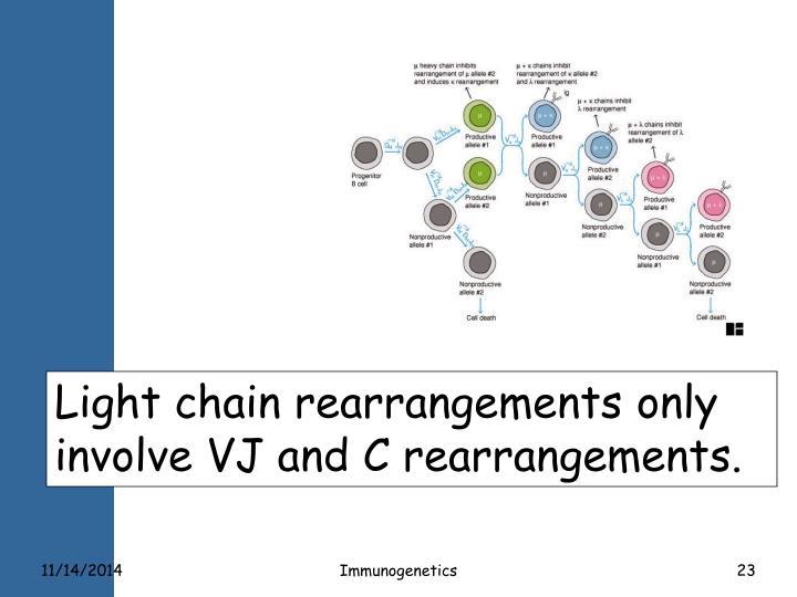 Light chain rearrangements only involve VJ and C rearrangements.