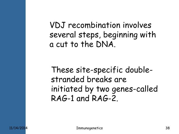 VDJ recombination involves several steps, beginning with a cut to the DNA.