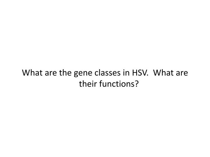 What are the gene classes in HSV.  What are their functions?