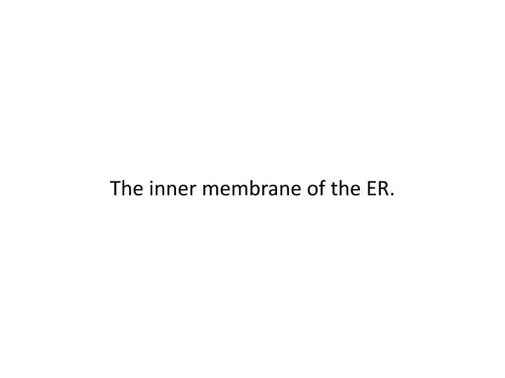 The inner membrane of the ER.