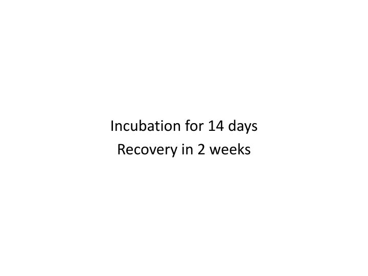Incubation for 14 days