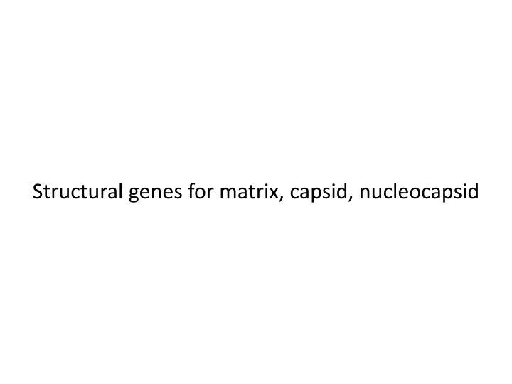 Structural genes for matrix, capsid,