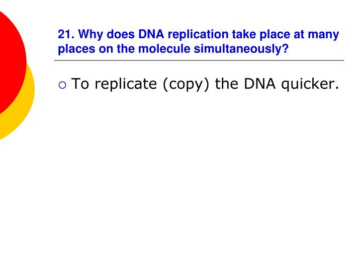 21. Why does DNA replication take place at many places on the molecule simultaneously?