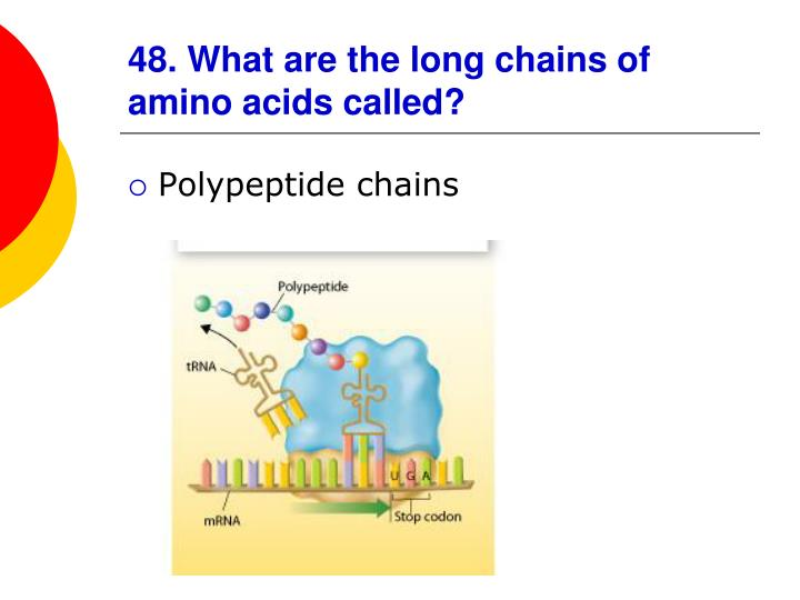 48. What are the long chains of amino acids called?