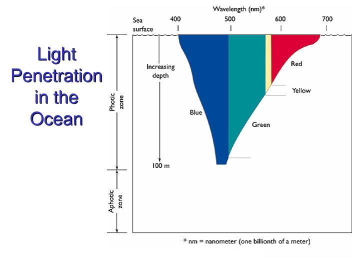 Light Penetration in the Ocean