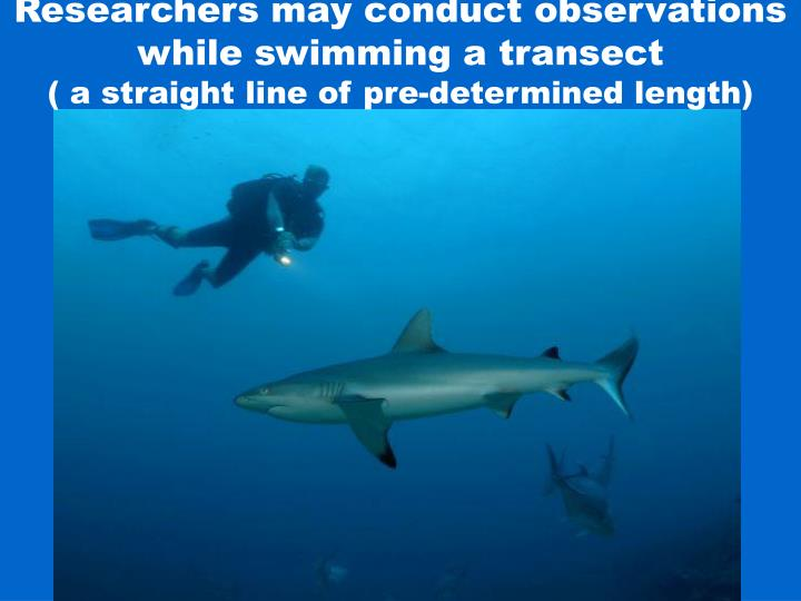 Researchers may conduct observations while swimming a transect