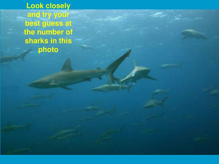 Look closely and try your best guess at the number of sharks in this photo