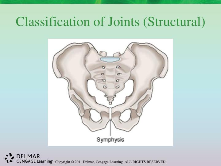 Classification of Joints (Structural)