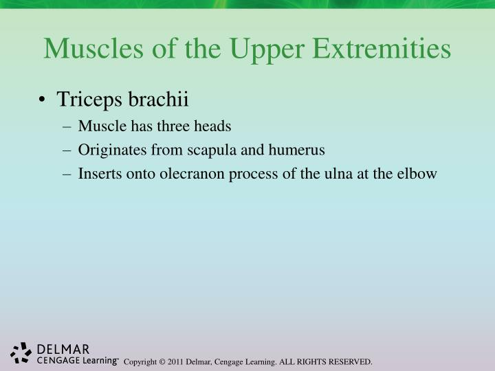 Muscles of the Upper Extremities