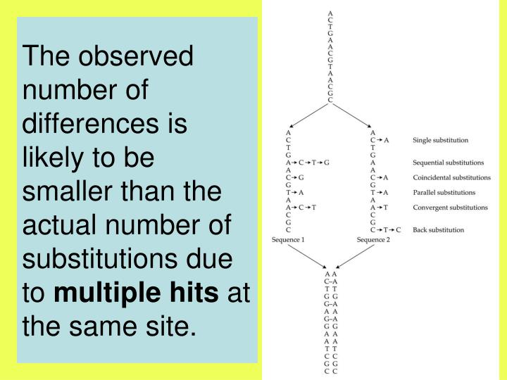 The observed number of differences is likely to be smaller than the actual number of substitutions due to