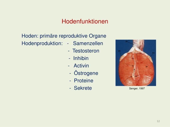 Hodenfunktionen