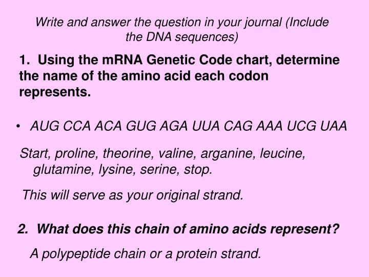 1.  Using the mRNA Genetic Code chart, determine the name of the amino acid each codon represents.