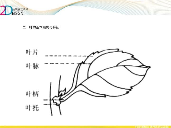 二  叶的基本结构与特征