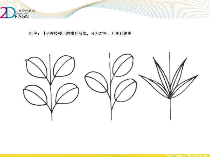 叶序:叶子在枝梗上的排列形式,分为对生、互生和轮生