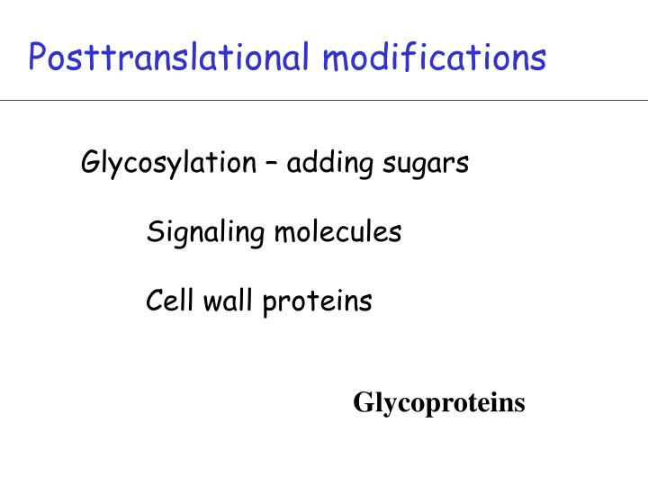 Posttranslational modifications