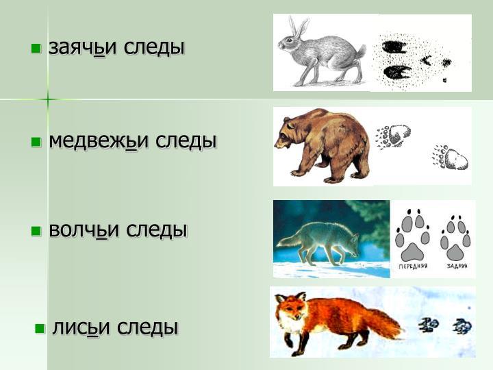 медвеж