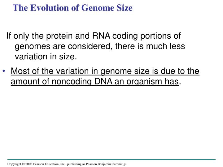 The Evolution of Genome Size