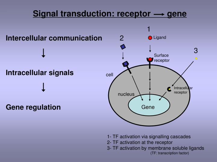 Signal transduction: receptor       gene