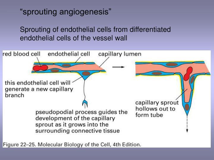 """sprouting angiogenesis"""