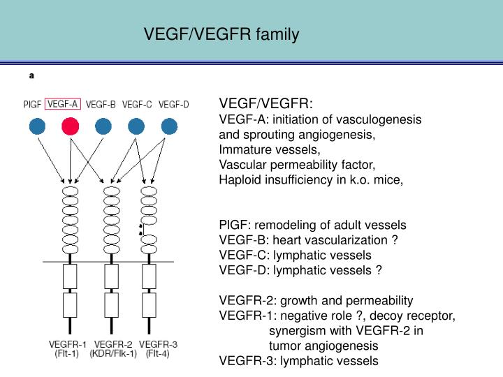 VEGF/VEGFR family