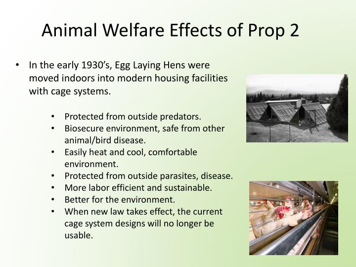 Animal Welfare Effects of Prop 2