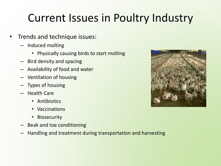 Current Issues in Poultry Industry