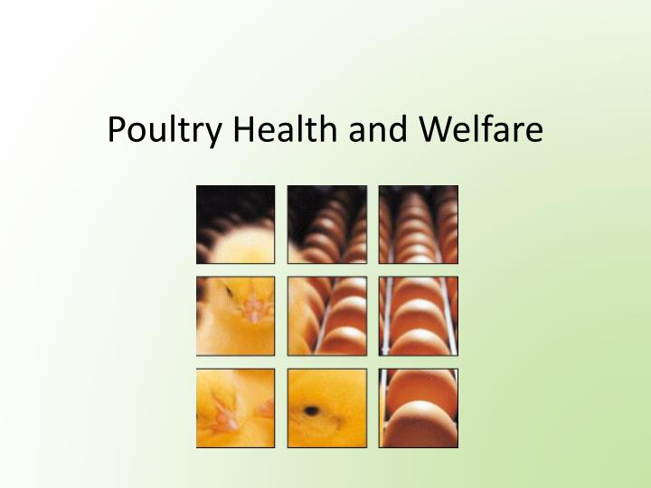 Poultry Health and Welfare