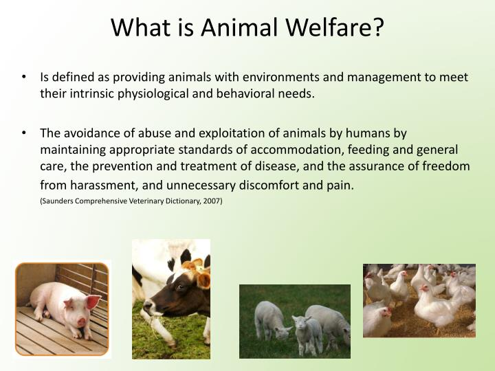 What is Animal Welfare?