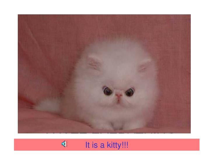 It is a kitty!!!