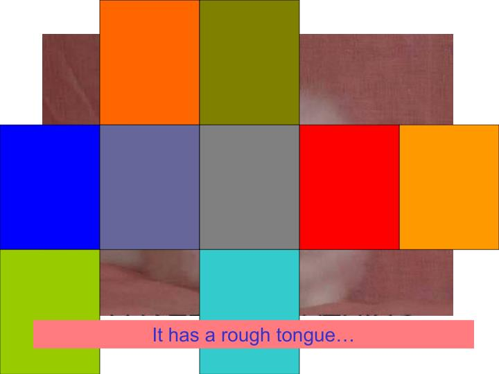 It has a rough tongue…