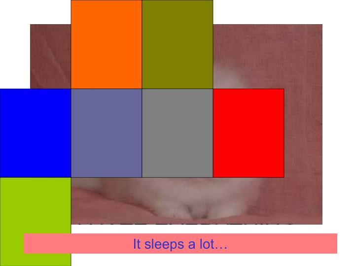 It sleeps a lot…