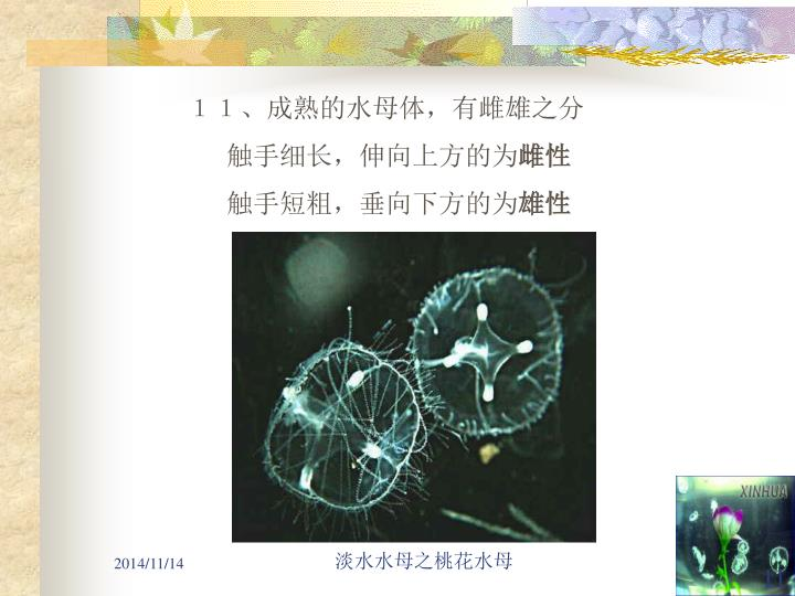 11、成熟的水母体,有雌雄之分