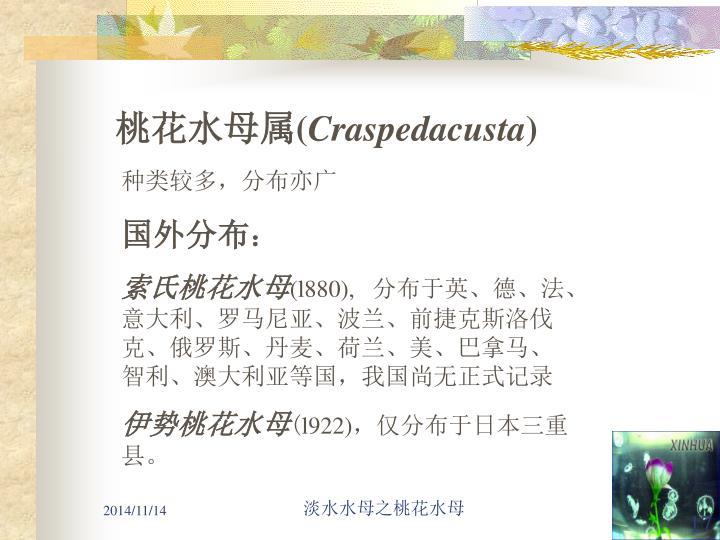 桃花水母属
