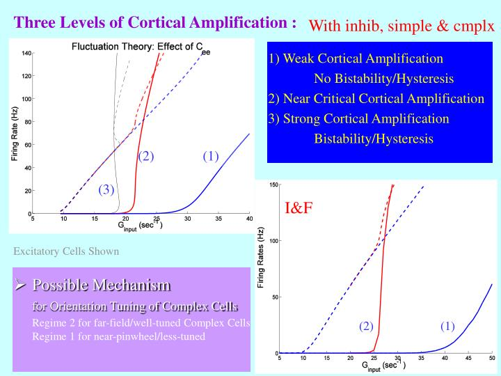 Three Levels of Cortical Amplification :