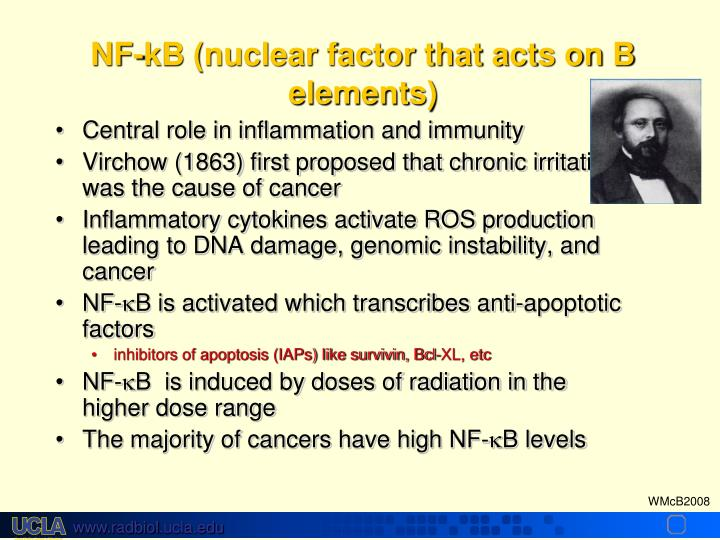 NF-kB (nuclear factor that acts on B elements)
