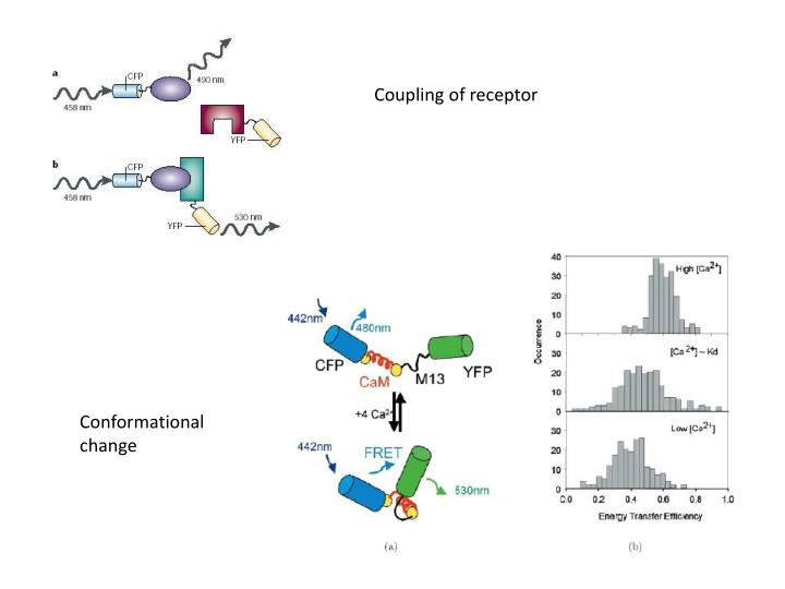 Coupling of receptor