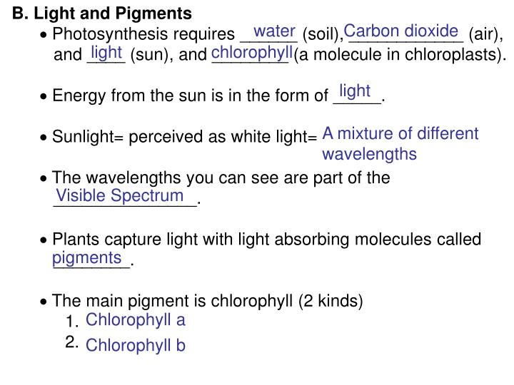 B. Light and Pigments