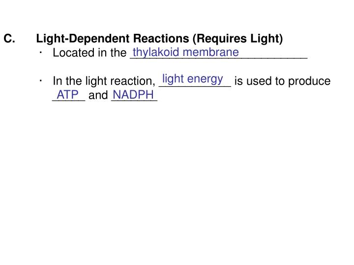 Light-Dependent Reactions (Requires Light)