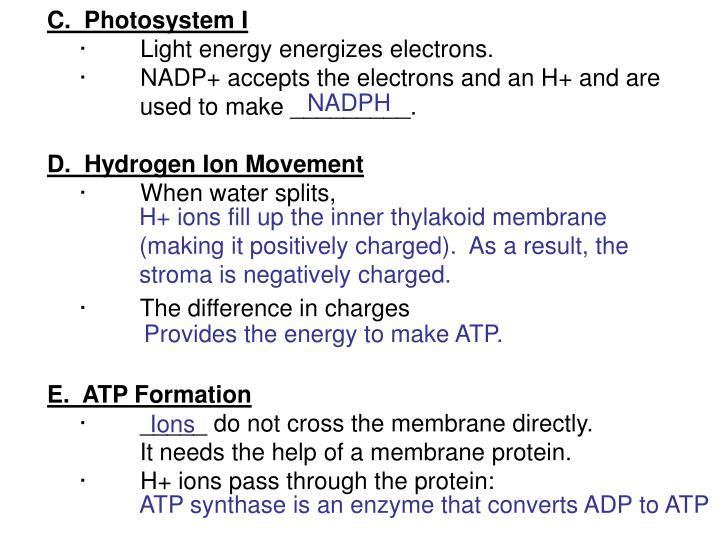 C.  Photosystem I