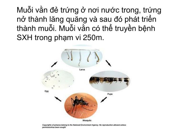Muỗi vằn đẻ trứng ở nơi nước trong, trứng nở thành lăng quăng và sau đó phát triển thành muỗi. Muỗi vằn có thể truyền bệnh SXH trong phạm vi 250m.