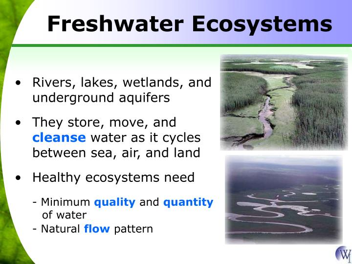 Freshwater Ecosystems