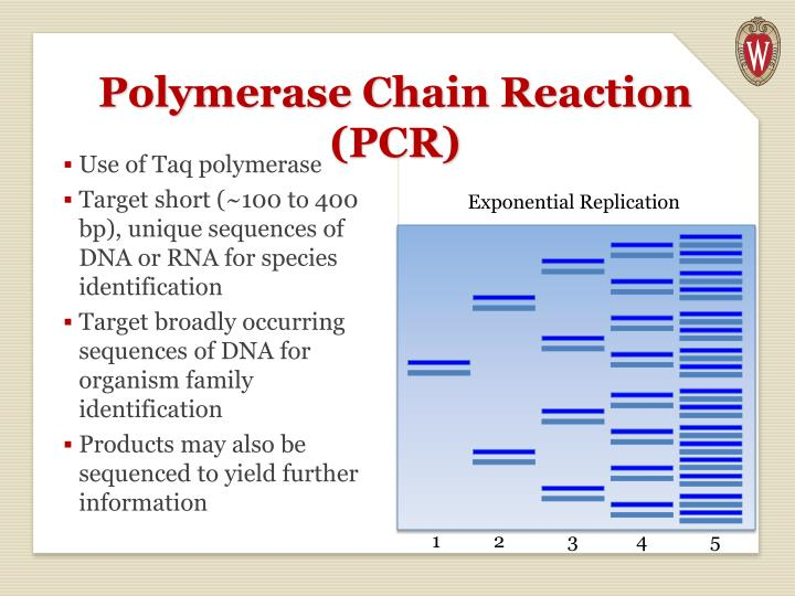 Polymerase Chain Reaction (PCR)
