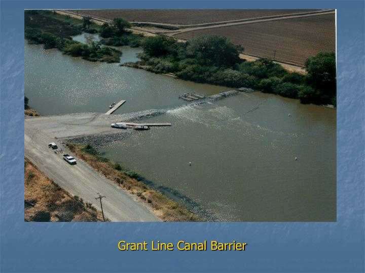 Grant Line Canal Barrier